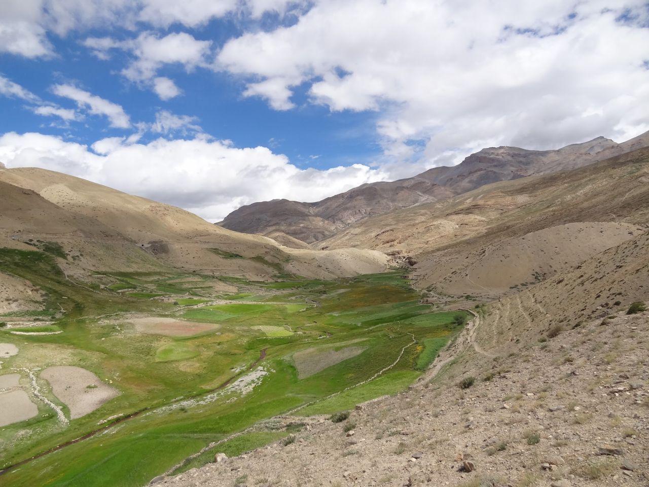 Green fields of Dumla villagers of Spiti